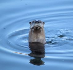 The River Otter by Duane Klipping on 500px