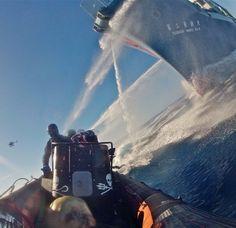 Arcitc Ocean - Activists against a Japanese Whaler