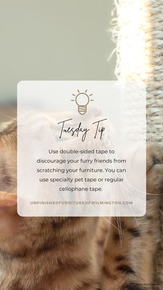 Use double-sided tape to discourage your cat from scratching your furniture. You can use specialty pet tape or just regular packing or craft tape. Most cats don't enjoy the feeling of something sticky on their paws and will avoid scratching that area. Like and follow for more tips! #TuesdayTip #Furniture #Wood #DIY #UnfinishedFurnitureofWilmington Cellophane Tape, Unfinished Furniture, Tape Crafts, Packing, Cats, Wood, Diy, Bag Packaging, Gatos