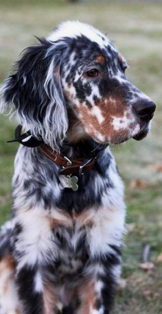 Shepherd Dog Breeds Theres a big chance that dog DNA tests will be helpful and useful especially when the data pours in.Shepherd Dog Breeds Theres a big chance that dog DNA tests will be helpful and useful especially when the data pours in. Cute Baby Animals, Animals And Pets, Funny Animals, Animals In Clothes, Pet Clothes, Dogs Tumblr, Cute Puppies, Dogs And Puppies, Cavapoo Puppies