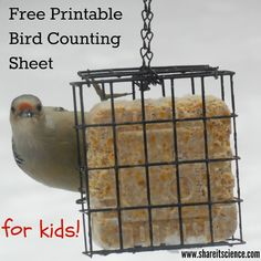 Counting birds with kids has never been easier with this free printable. Get your children and students engaged in wildlife education by participating in winter bird watching. Math Activities For Kids, Steam Activities, Math For Kids, Fun Math, Great Backyard Bird Count, Backyard Birds, Outdoor Fun For Kids, Teachers Toolbox, Citizen Science