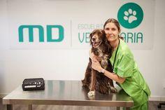 La Escuela de Veterinaria de MasterD es referente a nivel nacional en la preparación e inserción laboral del sector veterinario