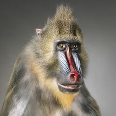 Tim Flach from his book 'More than Human'