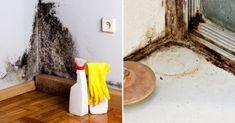 Ako sa zbaviť plesní vďaka domácemu čistiacemu prípravku?
