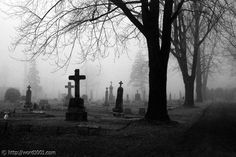 Cemetery Fog Black And White Landscape Photography