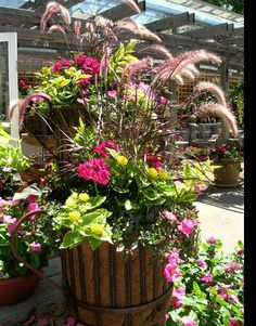 Containers Recipes For Sun Loving Plants Foliage Garden Pots