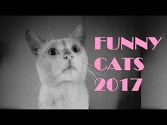 Fanny cats11(10 PHOTOS) – Cheerful Country