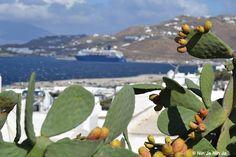 Notre croisiériste de la semaine nous embarque à Mykonos, merci à lui ! #onestbienla