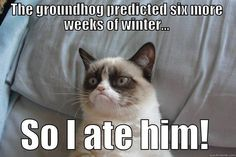 Grumpy cat Memes for kids are so funny.If you read it once then you want to read again and again. lol These Grumpy cat Memes for kids are so funny. Read This Best 25 Grumpy Cat Memes For Kids Grumpy Cat Quotes, Meme Grumpy Cat, Grumpy Kitty, Funny Cats, Funny Animals, Funny Memes, Funny Quotes, Funny Stuff, Hilarious Stuff