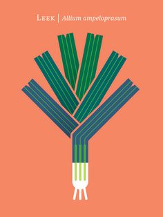 This poster/print series celebrates the wondrous varieties of vegetables, their unique forms and myriad of colors.