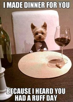 If only I could teach my pups to make me dinner or at the very least have a glass of wine poured when I walk throught the door.