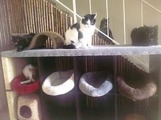 This site has great ideas for DIY cat furniture. I love it.