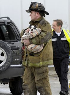 Boston Terrier rescued from car accident. Firemen rock!   <3