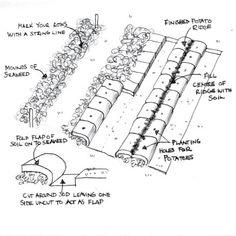 When To Plant Vegetables - Allotment Sowing Calendar, Planting ... Kuchen Garten Urban Cultivator Gewurze