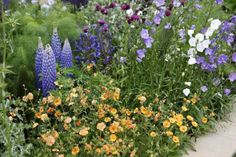 My Favorite Plant Combinations 41