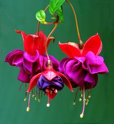 Beautiful Shade Loving Flowers for Your Apartment Patio