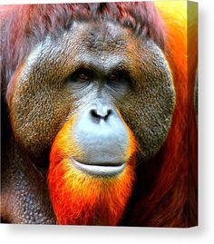Sumatran Orangutan Canvas Print featuring the mixed media Sumatran Orangutan Male by The Griffin Passant Streetworks