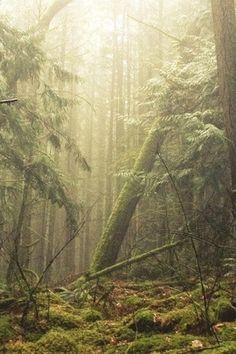 Woodland photography