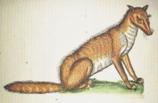 Image of a fox from Gesner's Historia