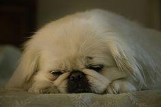Sleepy Chyna by Steven Sobel, via Flickr