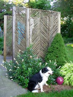 Mulch and resilient shrubs are great for dog-friendly gardens >> http://www.hgtv.com/decorating-basics/cute-pets-in-our-favorite-spaces/pictures/index.html?soc=pinterest