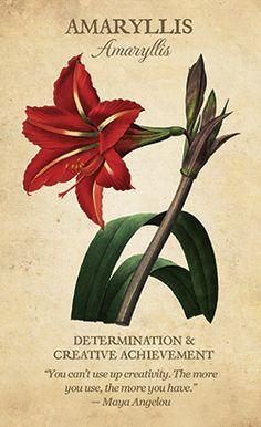Amaryllis meaning Botanical Inspirations Oracle Deck de Lynn Araujo Botanical Flowers, All Flowers, Botanical Illustration, Botanical Prints, Beautiful Flowers, Botanical Drawings, Tropical Flowers, Summer Flowers, Art Floral