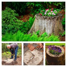 How to make a tree stump planter gardening Outdoor Planters, Flower Planters, Garden Planters, Succulents Garden, Removing Tree Stumps, Garden Design Ideas Videos, Garden Ideas, Tree Stump Planter, Old Trees