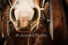 Nosey Horses, Photography, Animals, Photograph, Animales, Animaux, Fotografie, Photoshoot, Animal