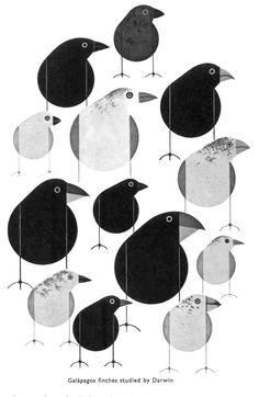 DARWIN study of finches
