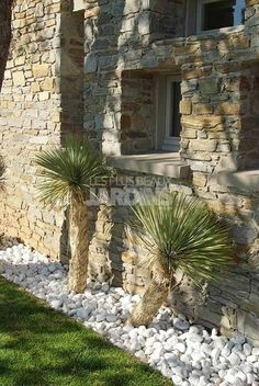 Gravier d coratif et galets pour enjoliver votre jardin for Yucca exterieur rustique