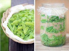 sirup ze smrkovych vyhonku pupenu recept postup navod priprava suroviny