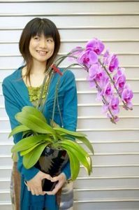 When your orchid's roots begin to grow out of the drainage holes, it's time to replant. Orchids may look like delicate beauties, but unless you are very rough, they are easy to replant with few worries. When choosing your orchid's next pot, opt for one that is no more than 2 or 3 inches in diameter larger than the original pot. Orchids like to be root-bound.