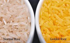 රන්වන් පැහැති සහල් : Golden Rice    http://iagronomist.blogspot.com/2012/06/blog-post.html