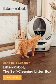 Animals And Pets, Baby Animals, Automatic Litter Box, Litter Robot, Self Cleaning Litter Box, Terrier, Connect, Gadgets, Cat Room