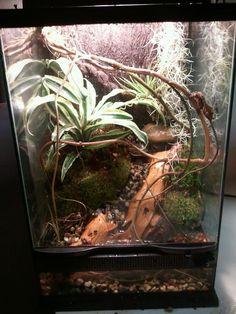 mini crested gecko vivarium complete with waterfall and gecko vivarium gecko terrarium Gecko Terrarium, Glass Terrarium, Succulent Terrarium, Crested Gecko Vivarium, Crested Gecko Care, Reptiles, Lizards, Animal Habitats, Pet Care
