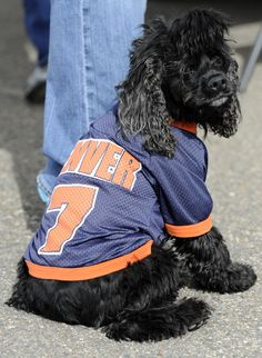 The off-season can sure be ruff for Denver fans of all species without football.