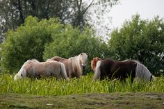 horses by hans s on Flickr.