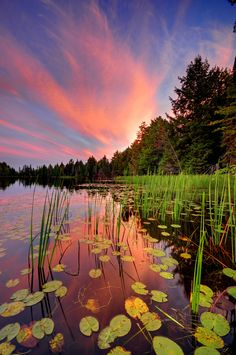 ~~Northwoods lake shore | lily pads sunset by Ryan Askren~~