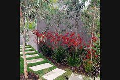 Fiona Brockhoff Design - Anigozanthos (Kangaroo Paws) mass planted under small Eucalypts Seaside Garden, Coastal Gardens, Small Gardens, Urban Landscape, Landscape Design, Garden Design, Landscape Plans, Australian Native Garden, Australian Plants