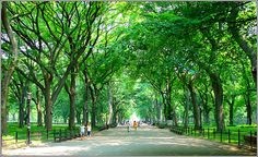 Being a Jaipurite, one knows well about an exceptional place to walk that is Central Park, which is the most popular park among walkers & Joggers, located almost in the centre of the city. Description from jaipurbeat.com. I searched for this on bing.com/images