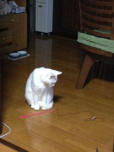 akirame_cat03