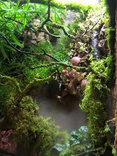 Janine Haime - Reptile and Amphibian Bioactive Setups - 12 juli 2015