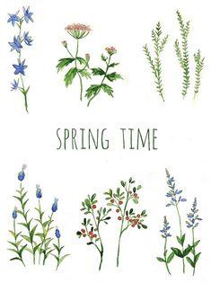 Free Spring 2013 watercolor wildflower wallpapers