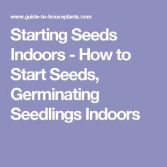 Starting Seeds Indoors - How to Start Seeds, Germinating Seedlings Indoors