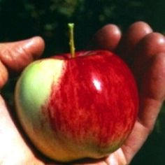 The legendary American folk hero, Johnny Appleseed, was a real person in history. His name was John Chapman, and he was a missionary of the Swedenborg...