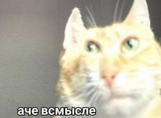 Funny Cat Videos, Funny Cats, Reaction Pictures, Funny Pictures, Harry Styles, Funny Looking Cats, Ugly Cat, Hello Memes, Russian Memes