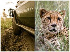 DayTreasure: Royal Madikwe - Madikwe Game Reserve Game Reserve, Wildlife, Games, Animals, Travel, Animales, Animaux, Gaming, Animal Memes