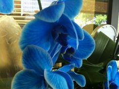 Florida orchid. #Pin By:Pinterest++ for iPad#