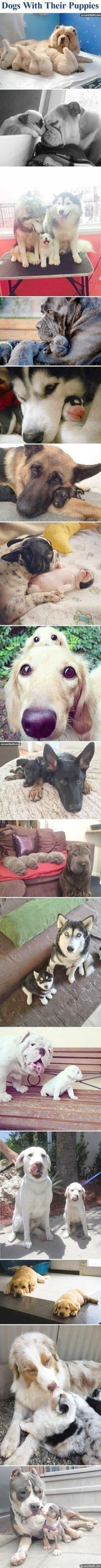 best Dogs images on Pinterest Cute dogs Cute puppies and Fluffy