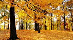 Free Beautiful HD d Nature Wallpaper For Computer and Smartphone